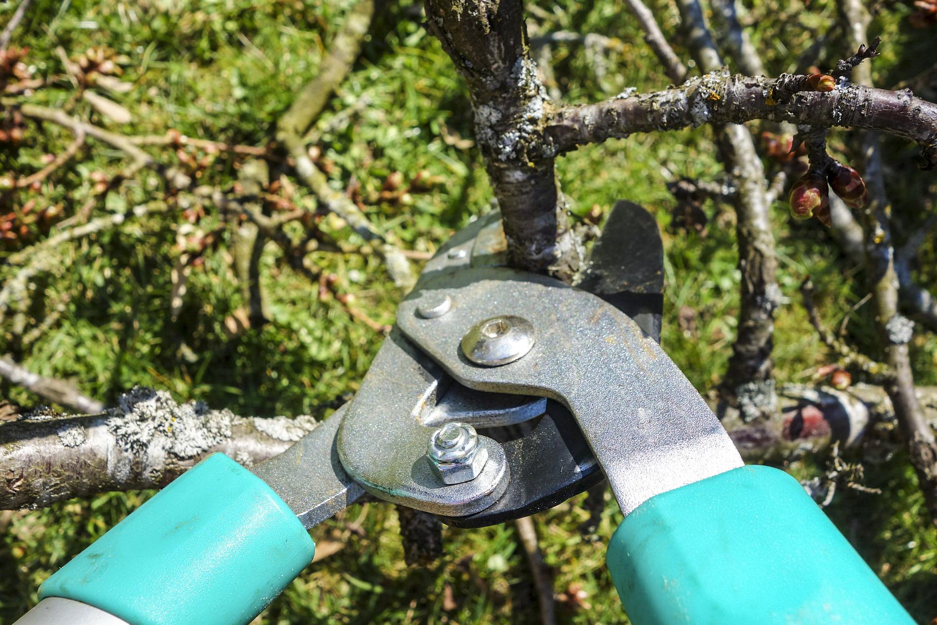 Baum beschneiden